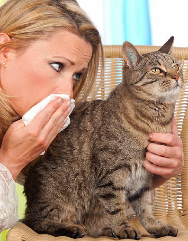 Аллергия на кошек и собак. причины, симптомы и признаки, диагностика и лечение патологии