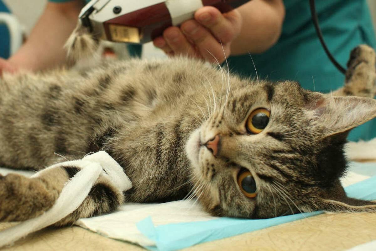 Что делать, если кошка умирает: как помочь и пережить