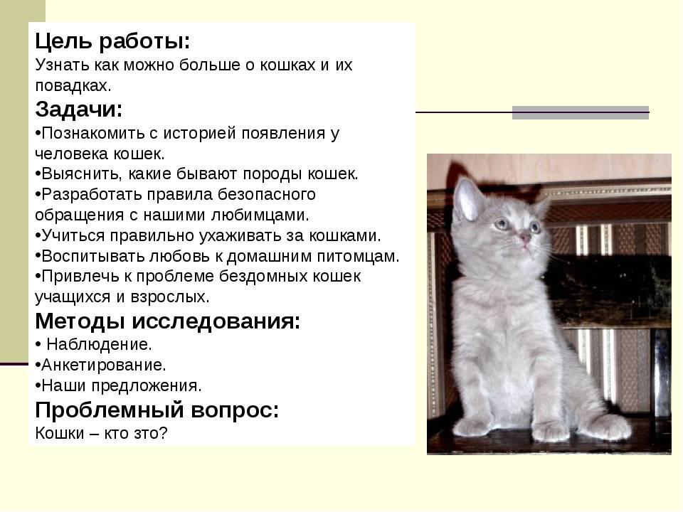 Характер и поведение кошек - общение кошек, охота, отношения с людьми | блог о домашних животных