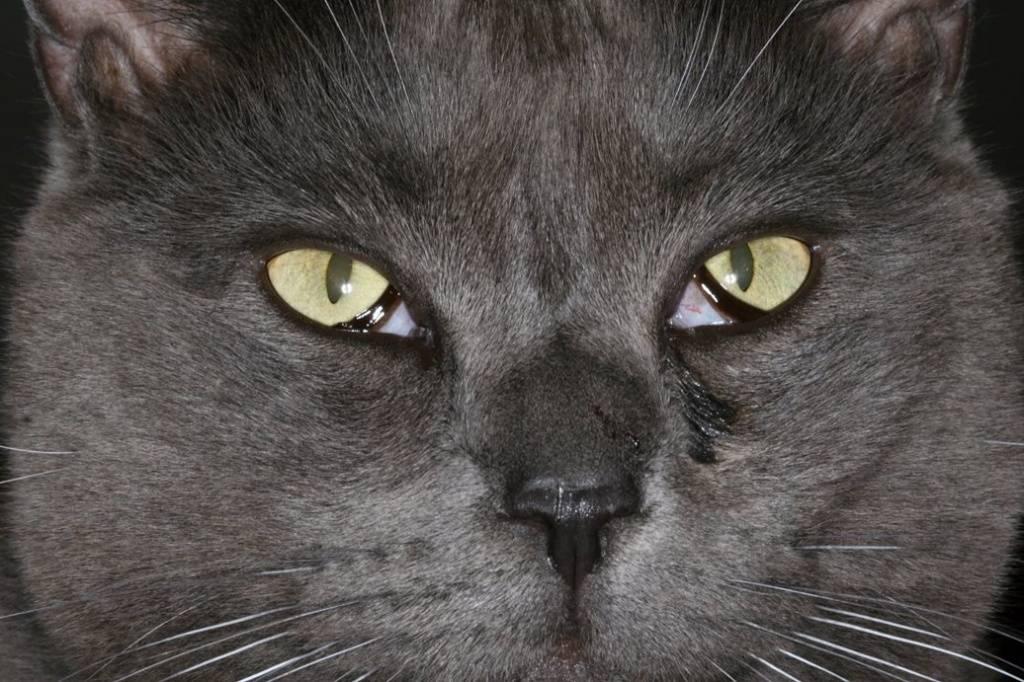Третье не лишнее: мигательная перепонка кошки