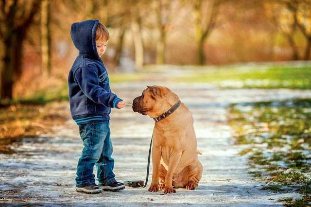 Заводить ли собаку? муки выбора - запись пользователя мадам олива (id1996643) в сообществе домашние животные в категории хотим завести зверушку - babyblog.ru