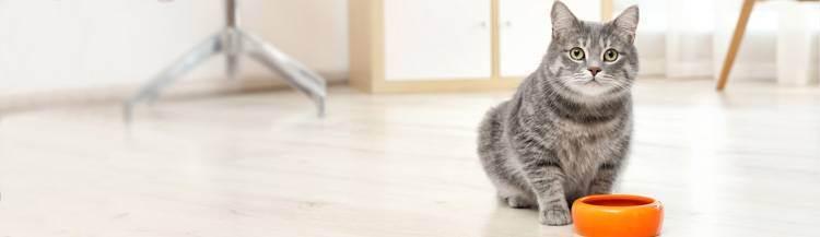 Когда и как переводить котенка на сухой корм