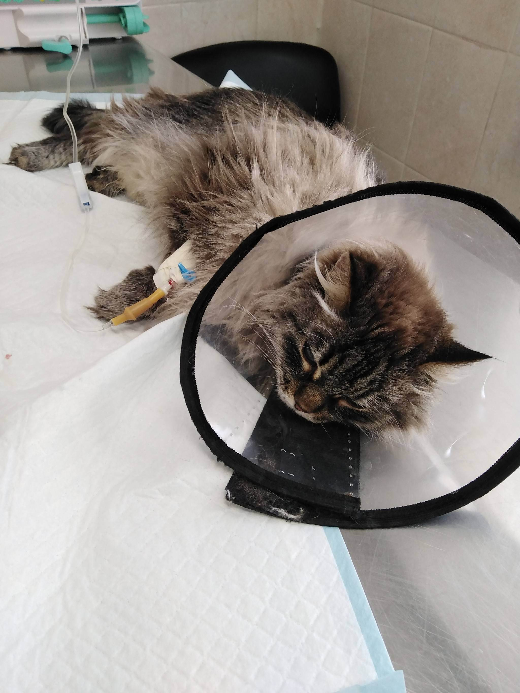 9 опасных для человека болезней, переносчиками которых являются кошки