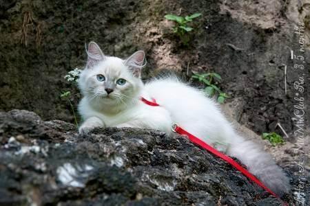 Кошка на даче: как защитить сад от кошки и кошку от сада? кошачьи опасности за городом в 2020 году