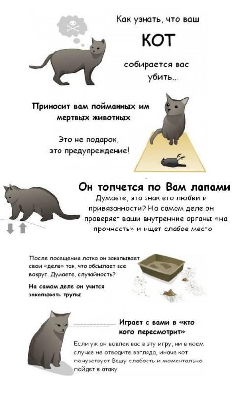 Кошка просит кота - симптомы, причины, способы облегчить влечение