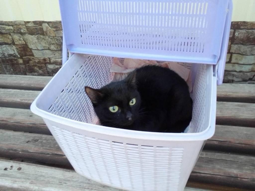 Черная кошка: приметы и суеверия. если черная кошка в доме, перебежала дорогу, приблудилась — к чему это? народные приметы про черную кошку