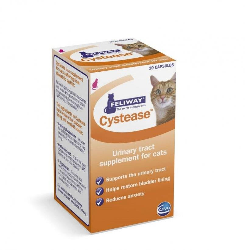Идиопатический цистит у кошек лечение — разбираем тщательно