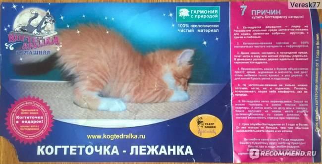 Как отучить котенка писать на кровать и почему кошки мочатся на постель