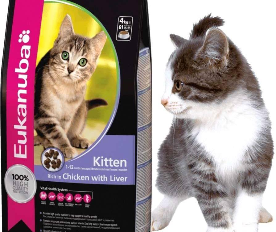 """Корм """"Эукануба"""" для кошек и котят: производитель, состав, класс и стоимость продукта"""