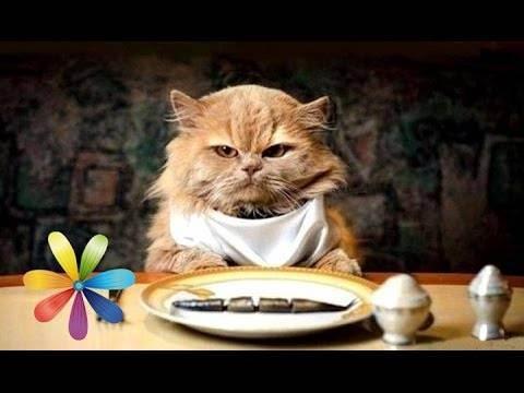 Как кормить кошку.