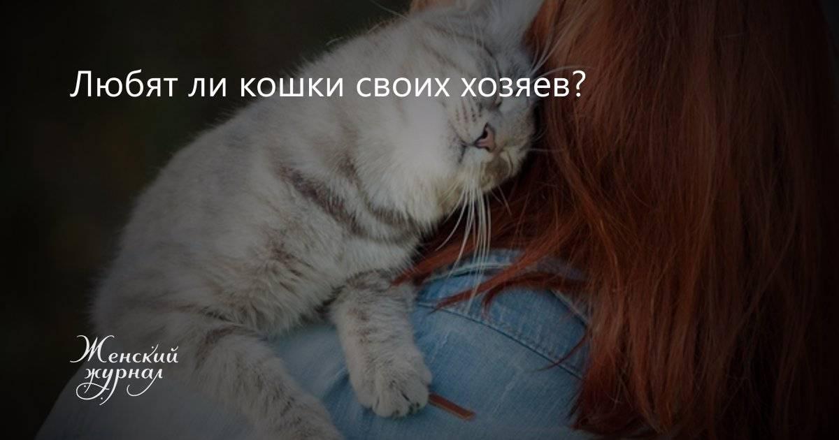 Любят ли кошки своих хозяев?