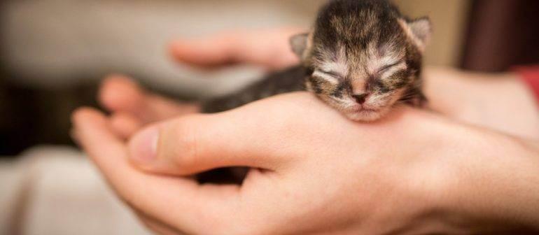 Как ухаживать за новорожденными котятами