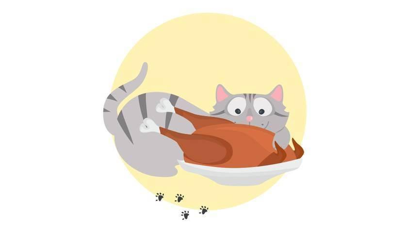 Почему коты любят оливки и маслины, их польза и вред. кошка любит оливки: кормить или запретить? можно ли давать котикам оливковую олию
