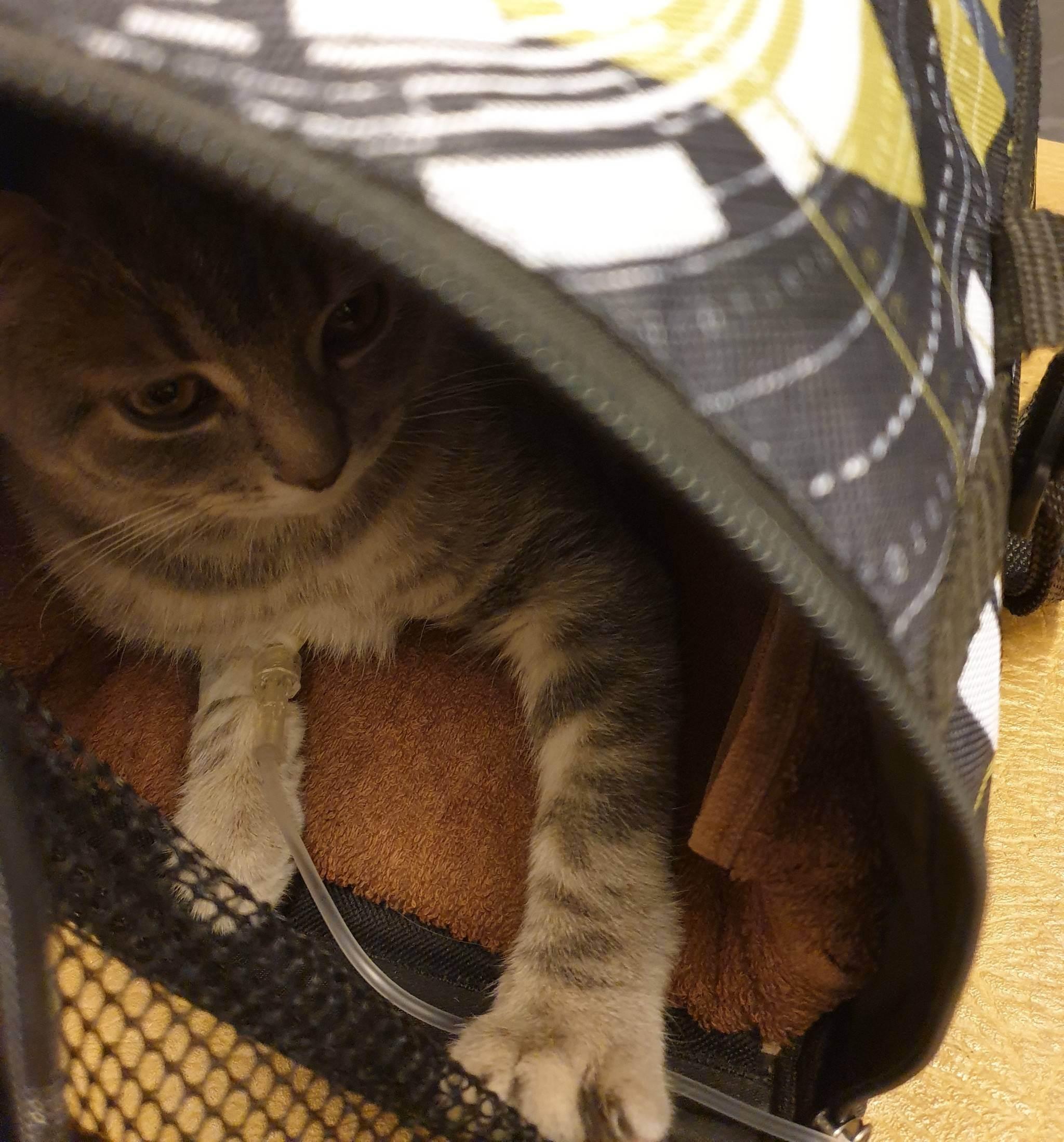Кошка ссыт везде. ничего не помогает.