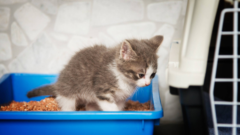 Кошку рвет желтой жидкостью – причины, диагностика и лечение