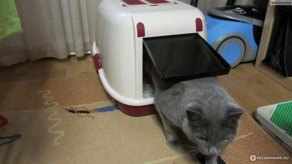 Приучить котенка или кошку к лотку – одна песня, одно решение: не так страшен черт, как его рисовали?