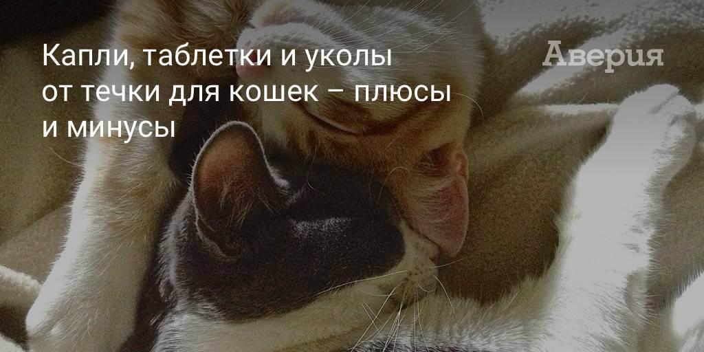 Народные средства для кошек противозачаточные