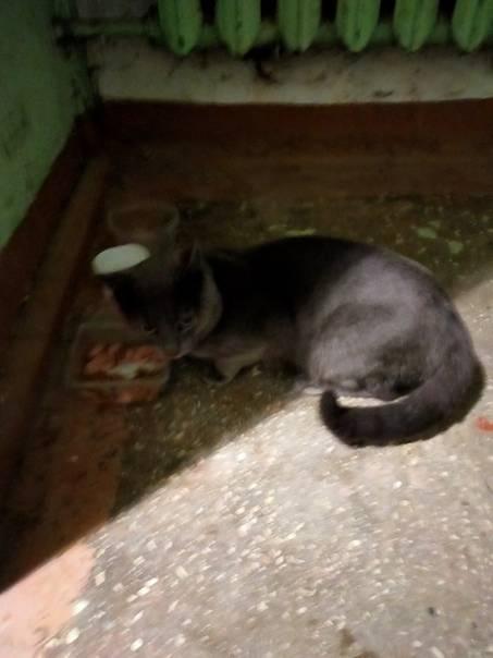 Кошка гадит где попало – как отучить, что делать? 25 способов