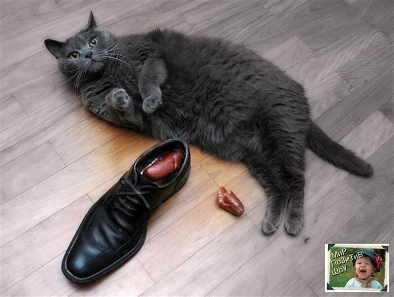Как избавиться от запаха кошки в обуви – pet-mir.ru