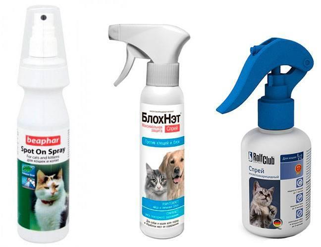 Запахи которые не переносят кошки и коты: какие запахи не любят