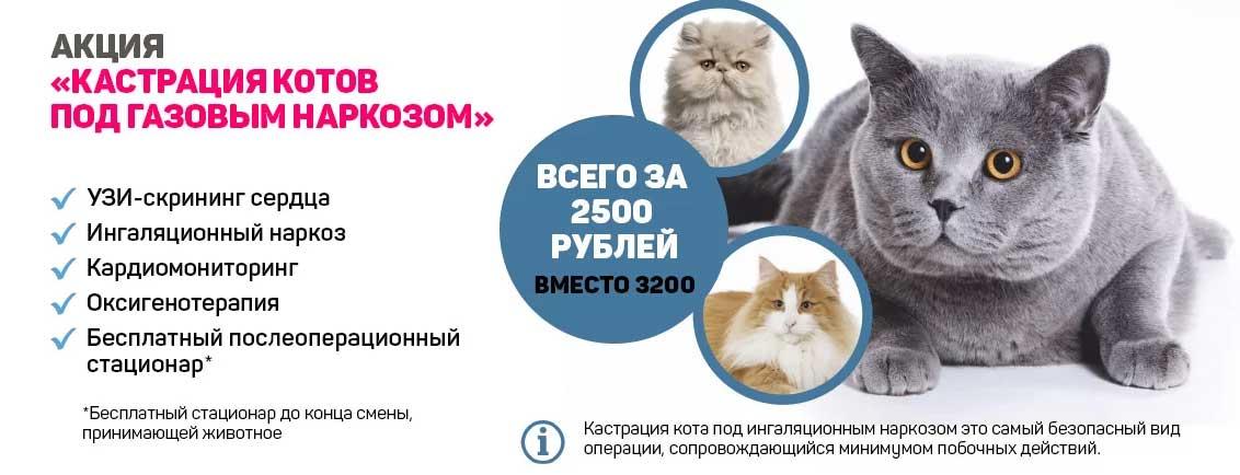 Кормление кота после кастрации: особенности натурального и промышленного питания