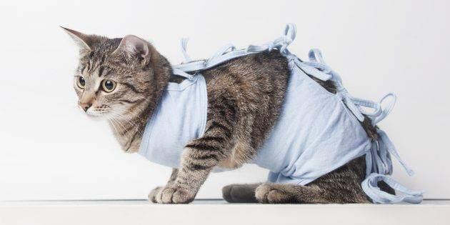 Все что нужно знать о стерилизации кошек
