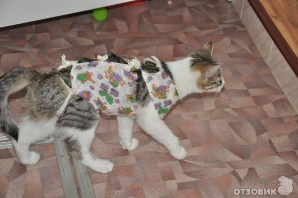 Попона (бандаж) для кошки после операции: как сшить самостоятельно и правильно завязать