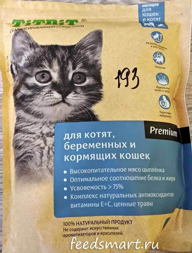 Чем кормить беременную кошку: особенности натурального и промышленного питания