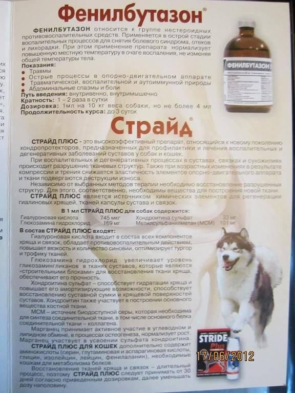Инструкция по применению препарата Страйд для кошек