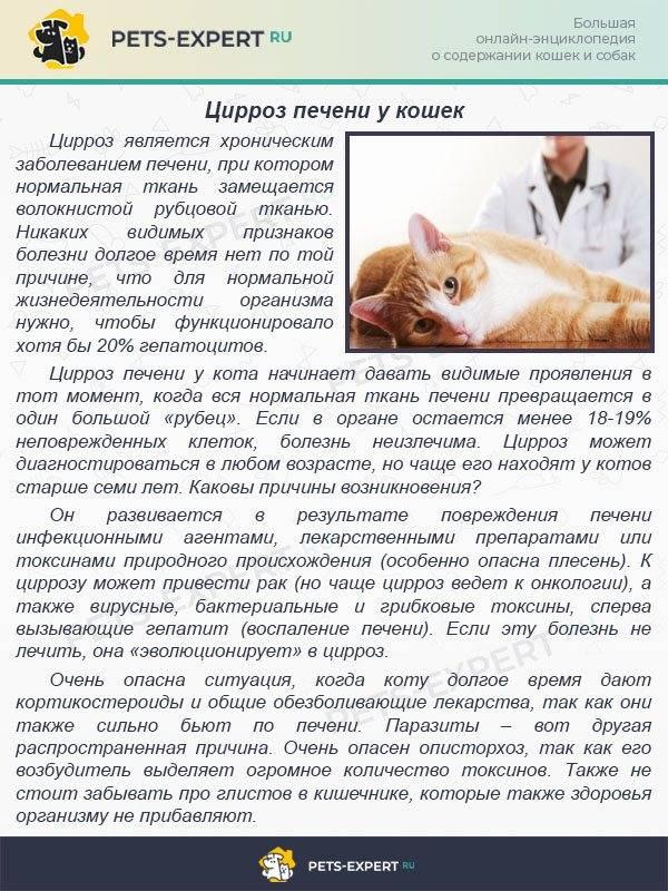 Болезни печени у кошек, симптомы, лечение, препараты: где находится орган и как его лечить?
