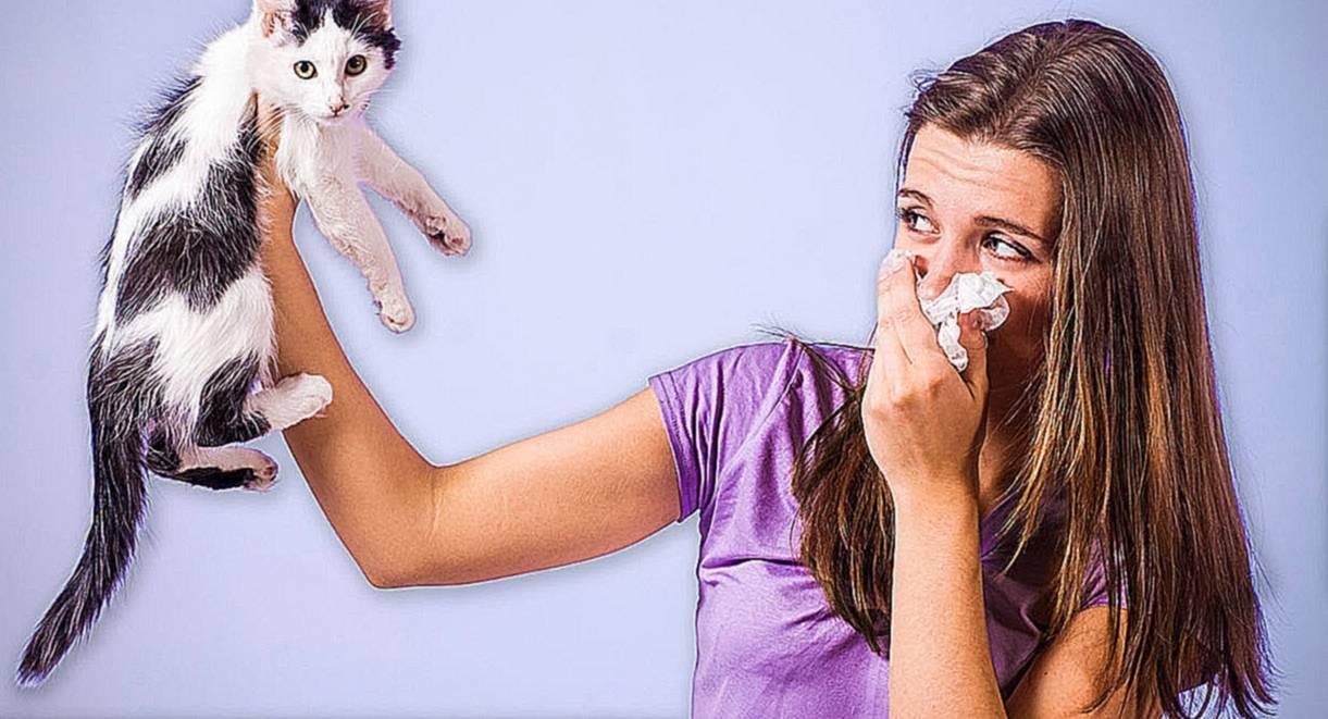 Аллергия на шерсть | компетентно о здоровье на ilive