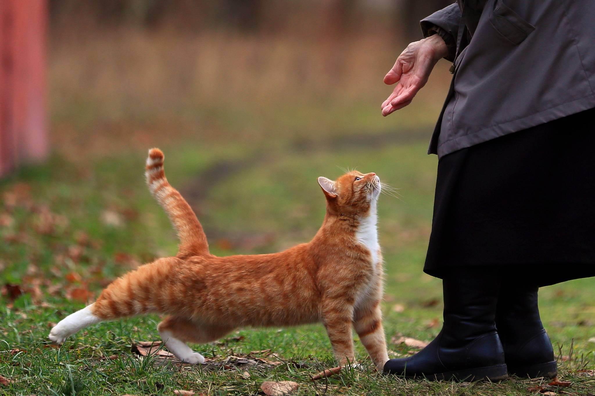 Можно ли кошке давать сырое мясо?