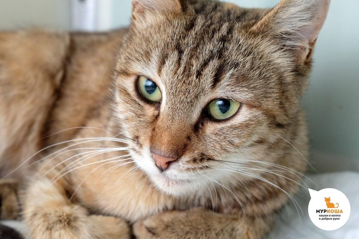 Кот чешет уши и трясет головой – причины, методы диагностики, принципы лечения и профилактики