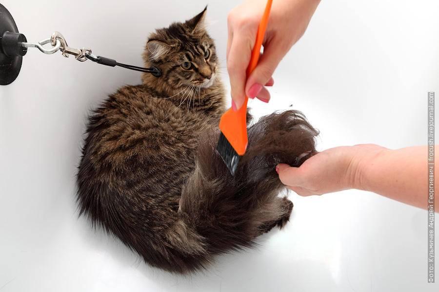 Как помыть кота: полезные советы, правила и рекомендации ухода за питомцем в домашних условиях (80 фото)