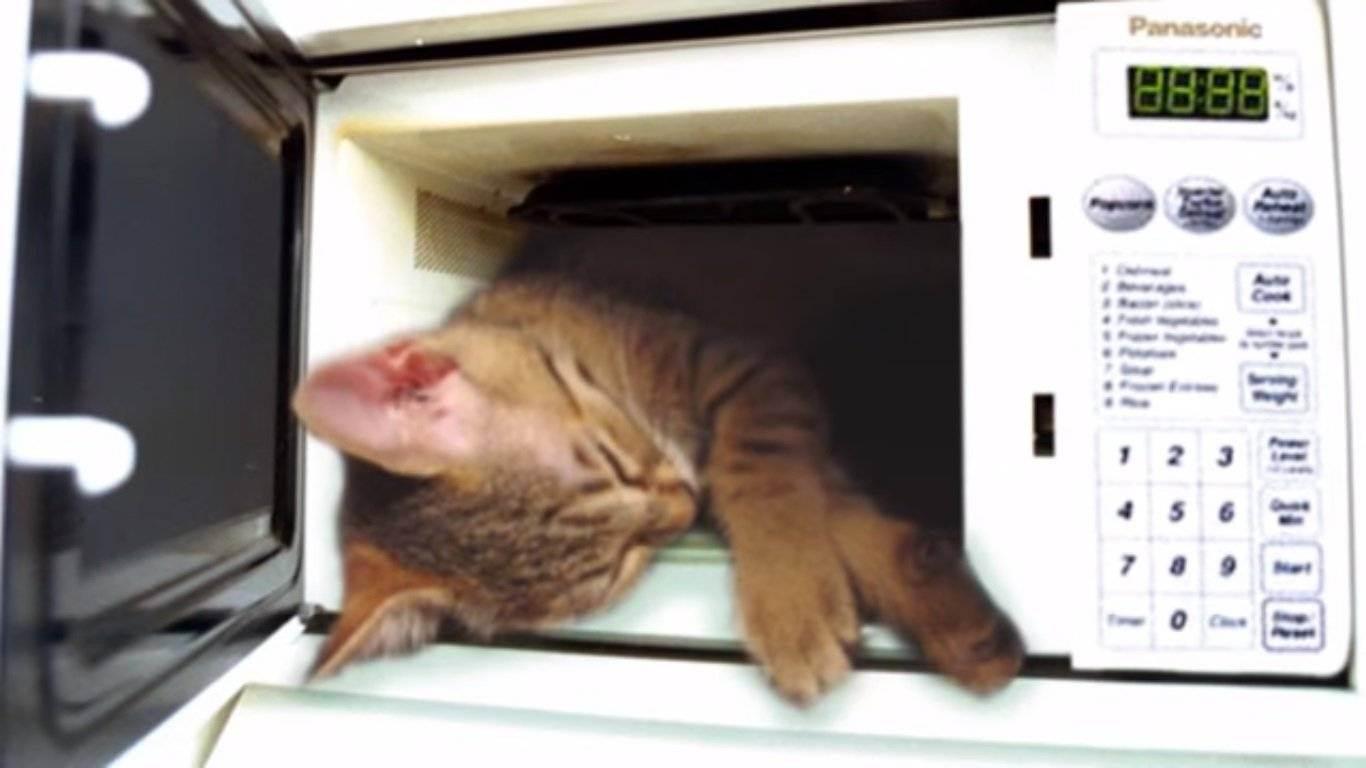 Можно ли сушить кошек феном и как это правильно делать? | кот и кошка