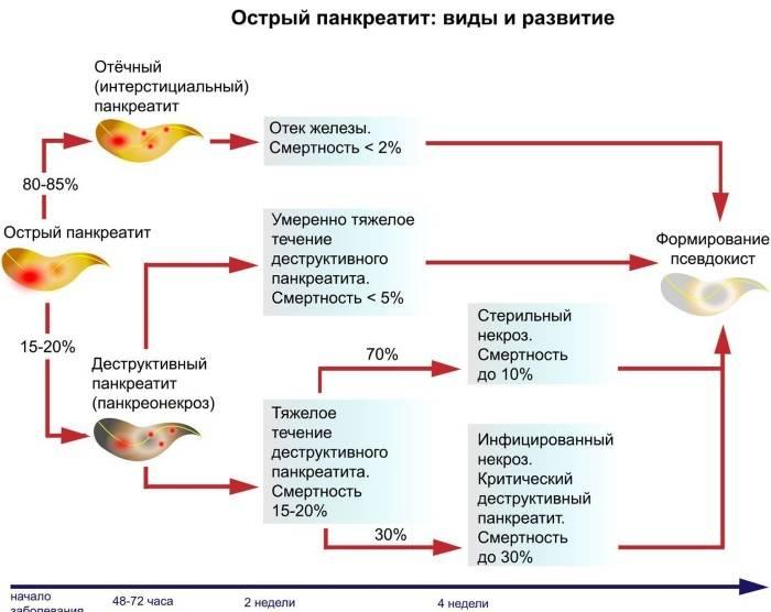 Острый панкреатит у кошек, симптомы и лечения воспаления поджелудочной железы, питание и уход