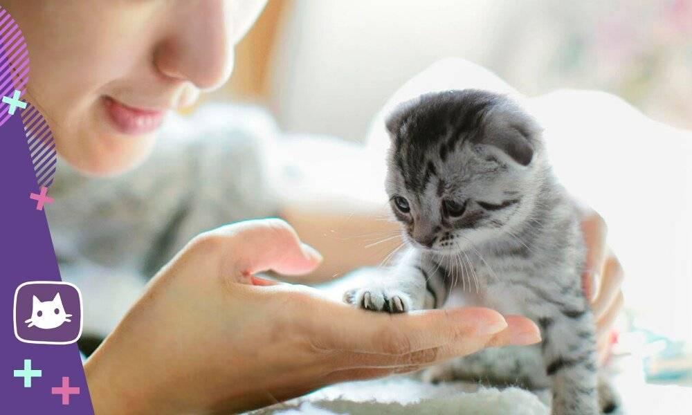 Стоит ли заводить кошку?