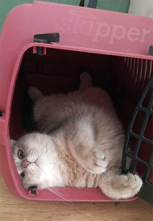 Сумка-переноска для кошек. как выбрать переноску для кошки