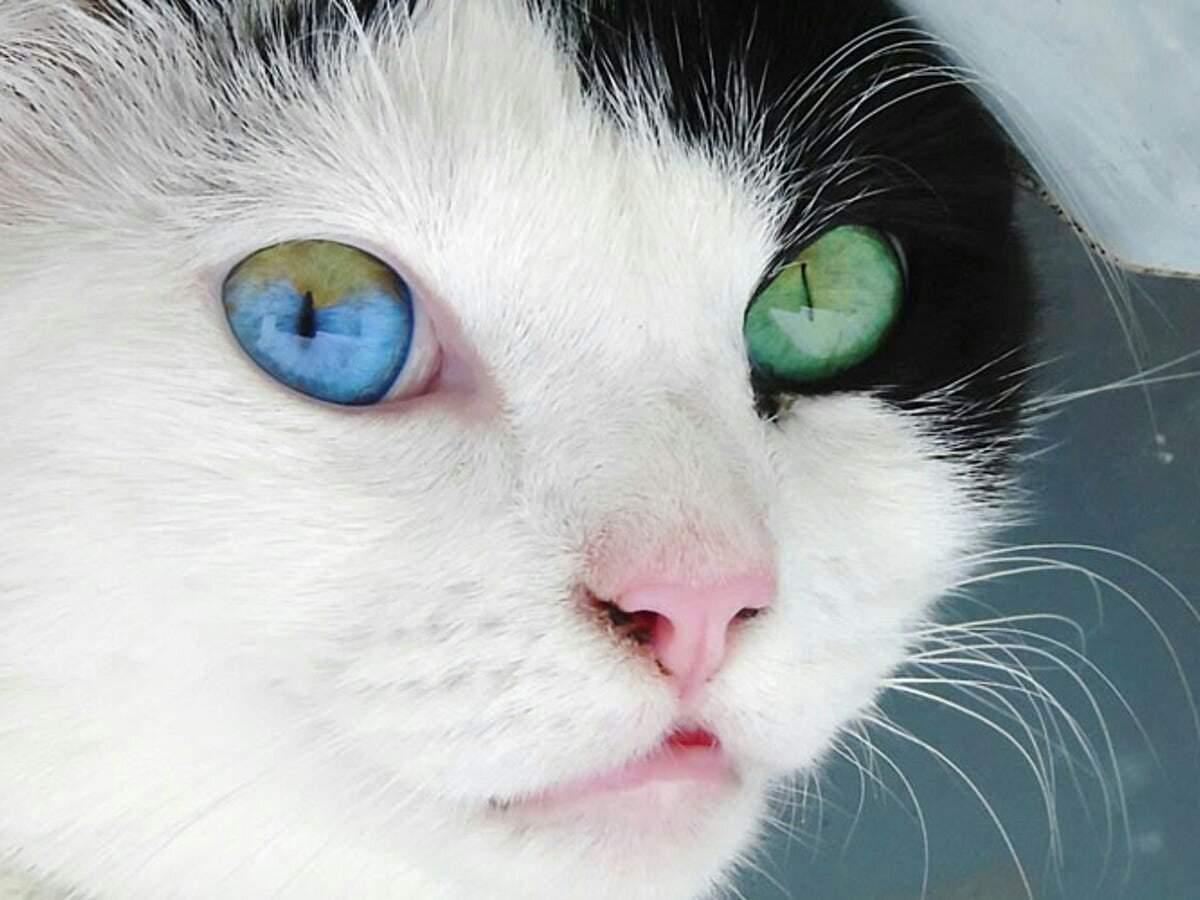 Когда меняется цвет глаз у котят и почему это происходит, отличительные особенности у разных пород