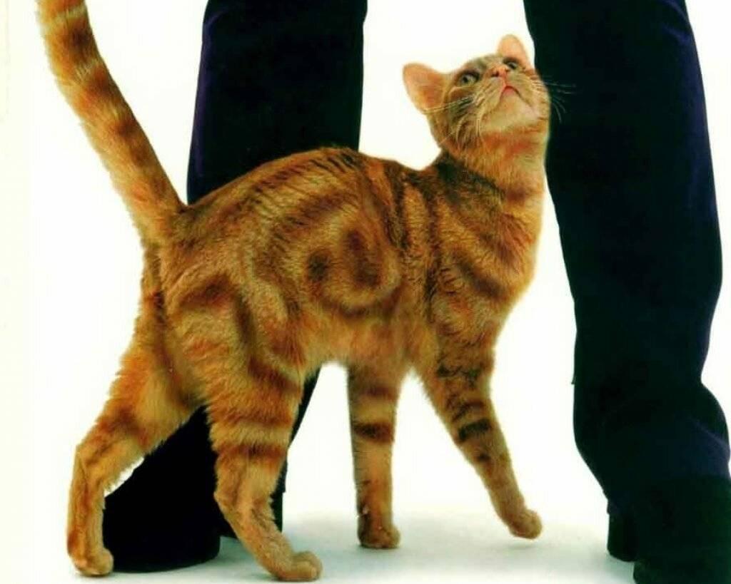 7 причины почему кошка лижет человека