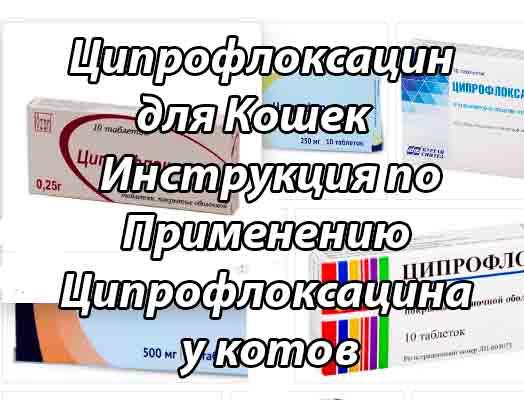 Дозировка ципрофлоксацина кошке - zhivomag