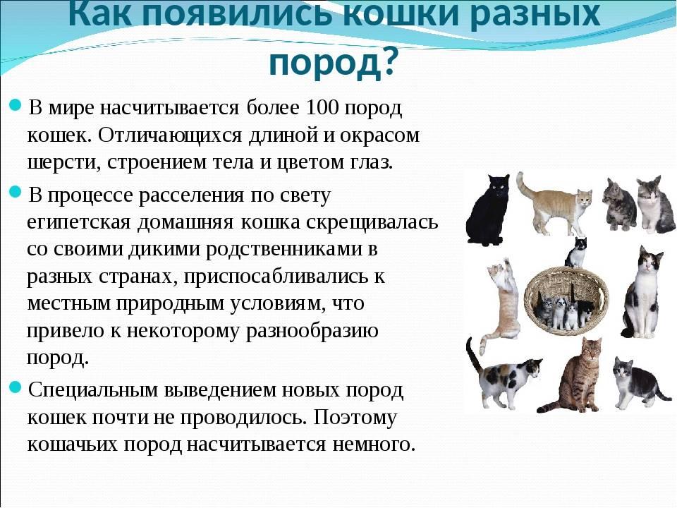 Сколько лет живут кошки и коты, соотношение возраста