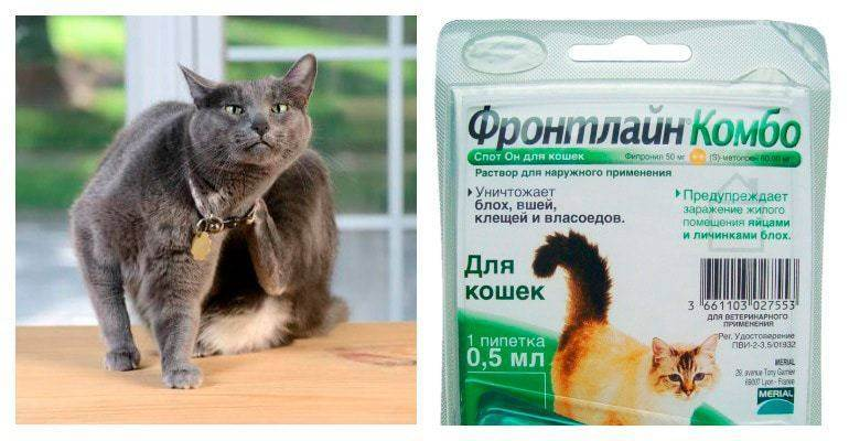 Фронтлайн для кошек и котят: инструкция по применению, отзывы