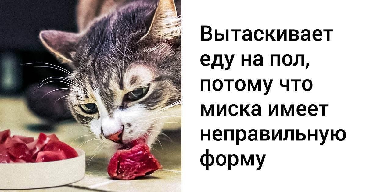 Распространение кошек по миру, кошки в древнем египте - кошачьи мифы: интересное о котах