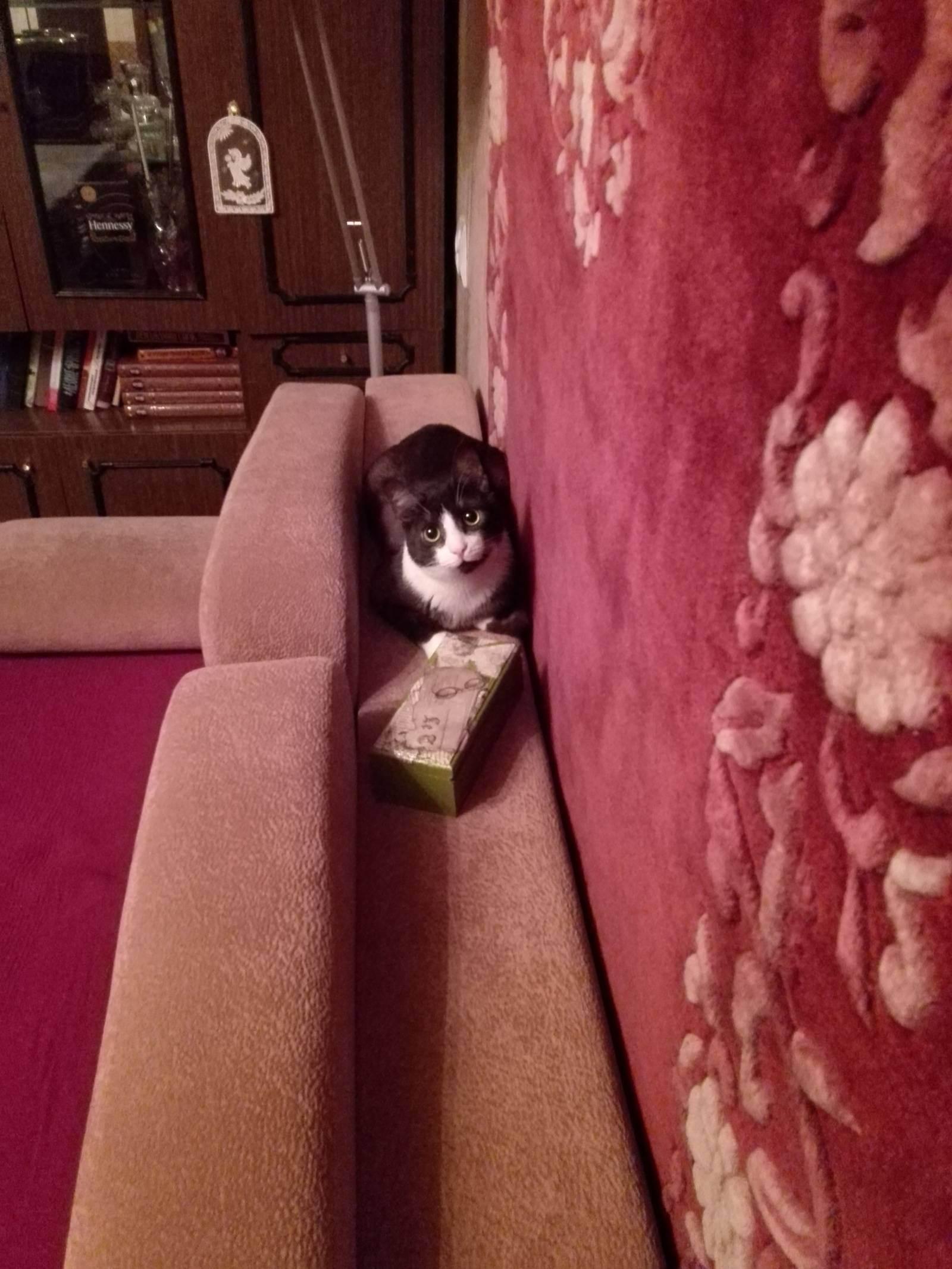 Комнатный хищник — можно ли давать коту сырое мясо?