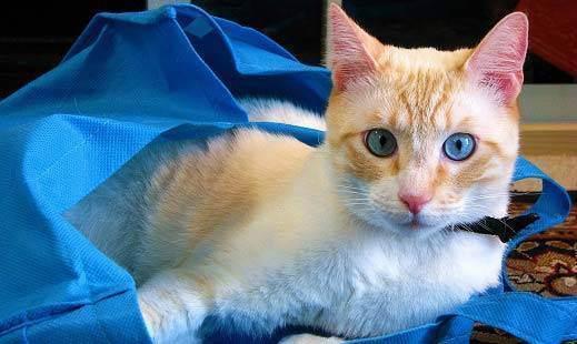 Переноска для кошки. краткий обзор советов при выборе контейнера