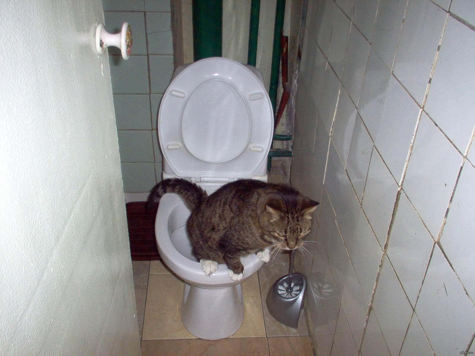 Кот часто ходит в туалет по маленькому по чуть-чуть: причины, диагностика и лечение