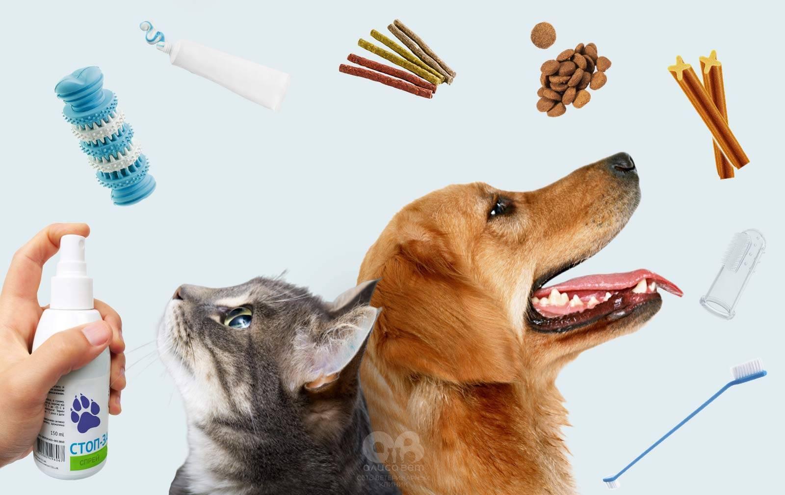 Как почистить кошке зубы в домашних условиях: правильное проведение процедуры, необходимые средства