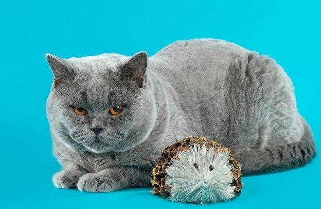Кот сильно линяет: почему и как этого избежать?