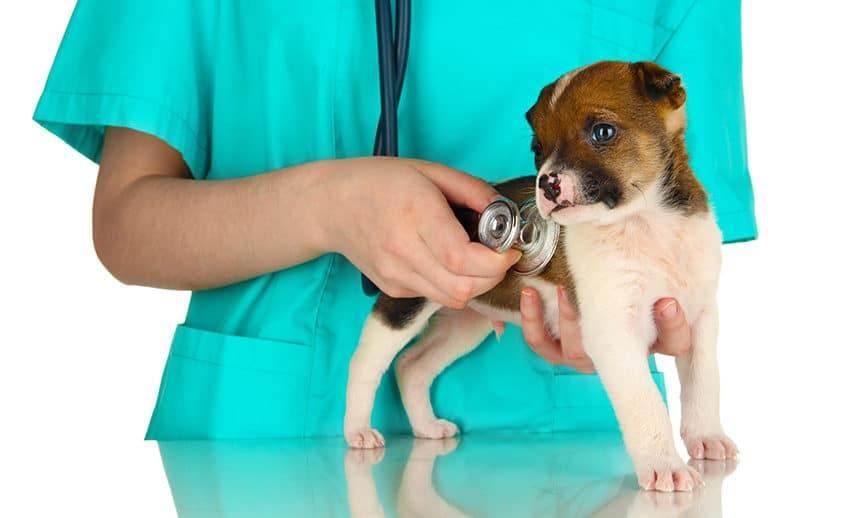 Консультация ветеринара. что ожидать на приеме?